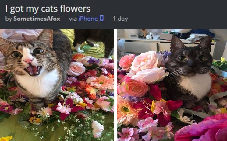 i got my cats flowers: pics of two cats among big colorful flowers arrangements