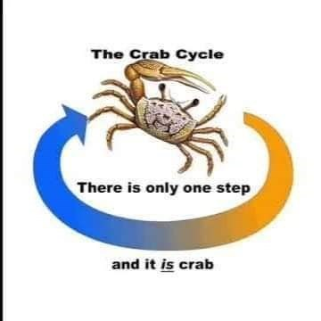 Crab - The Crab Cycle There is only one step and it is crab