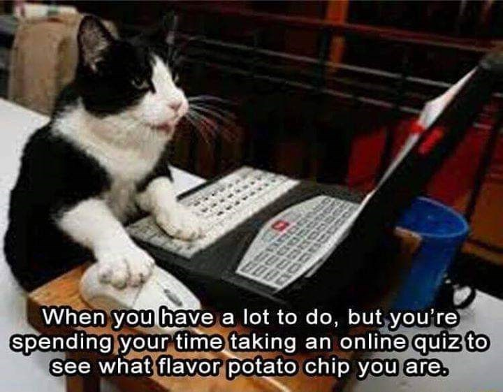 black and white cat using a laptop with its paw on a mouse: when you have a lot to do but you're spending your time taking an online quiz to see what flavor potato chip you are