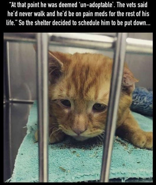 "Cat - ""At that point he was deemed 'un-adoptable'. The vets said he'd never walk and he'd be on pain meds for the rest of his life."" So the shelter decided to schedule him to be put down."