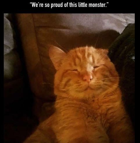 "Cat - ""We're so proud of this little monster."""