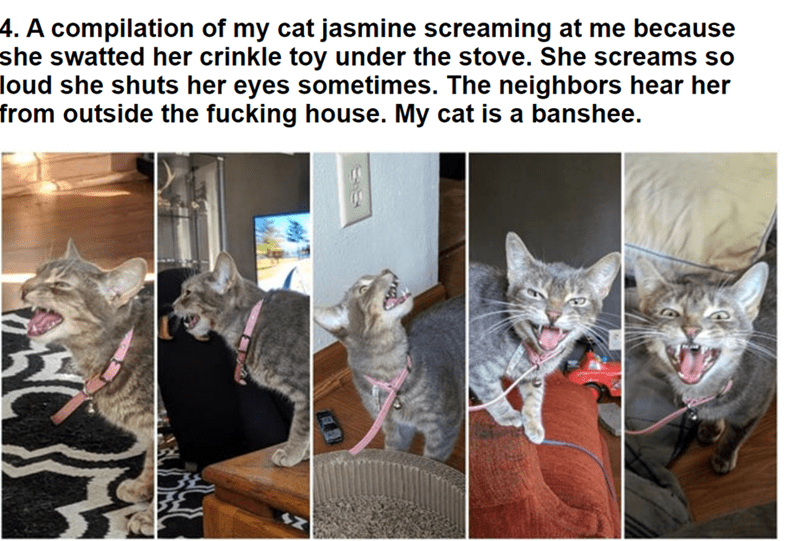 Cat - 4. A compilation of my cat jasmine screaming at me because she swatted her crinkle toy under the stove. She screams so loud she shuts her eyes sometimes. The neighbors hear her from outside the fucking house. My cat is a banshee.
