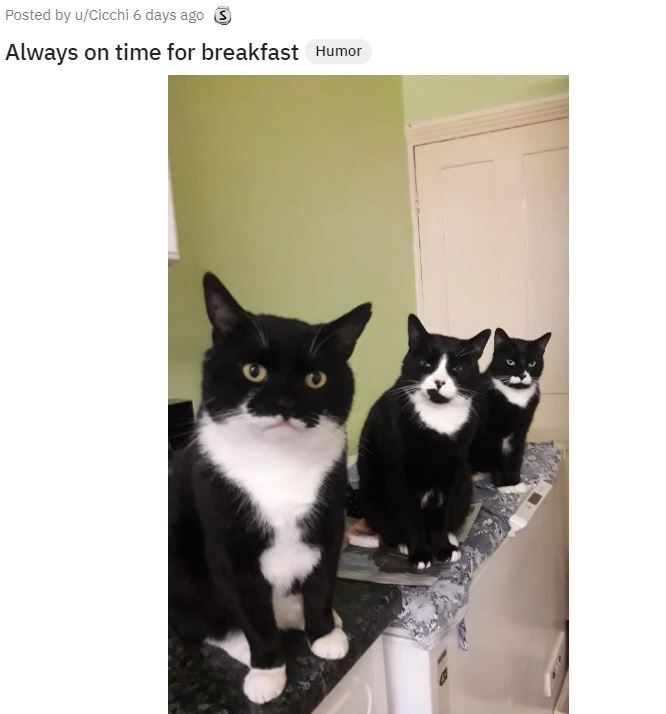Cat - Posted by u/Cicchi 6 days ago 3 Always on time for breakfast Humor