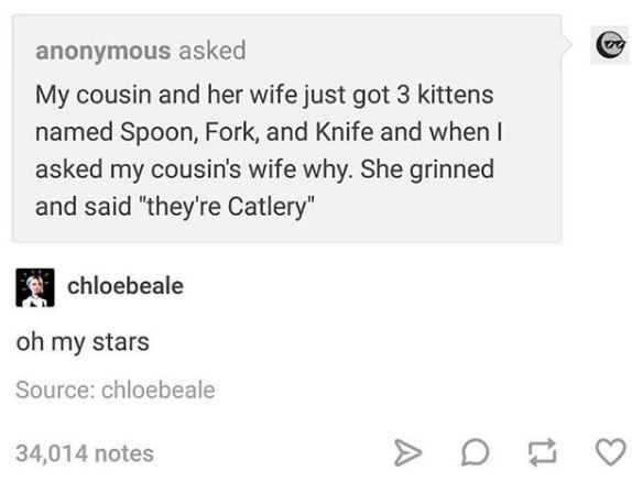 """Text - anonymous asked My cousin and her wife just got 3 kittens named Spoon, Fork, and Knife and when I asked my cousin's wife why. She grinned and said """"they're Catlery"""" chloebeale oh my stars Source: chloebeale > D! 34,014 notes"""