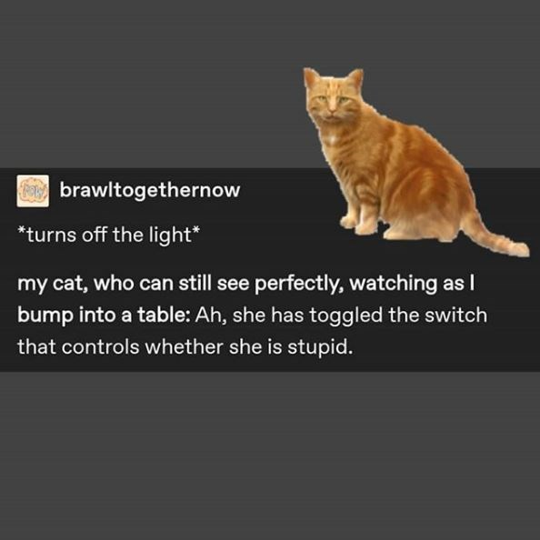 Cat - brawltogethernow *turns off the light* my cat, who can still see perfectly, watching as I bump into a table: Ah, she has toggled the switch that controls whether she is stupid.