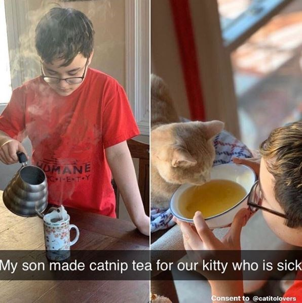 Photo caption - OMANE C-1-E TOY My son made catnip tea for our kitty who is sick Consent to @catitolovers