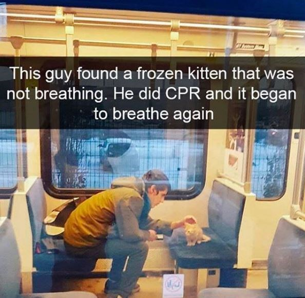 Transport - This guy found a frozen kitten that was not breathing. He did CPR and it began to breathe again