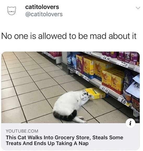 Cat - catitolovers No one is allowed to be mad about it 70P @catitolovers £4.19 £2 2.49 E1.10 £6 This Cat Walks Into Grocery Store, Steals Some Treats And Ends Up Taking A Nap YOUTUBE.COM