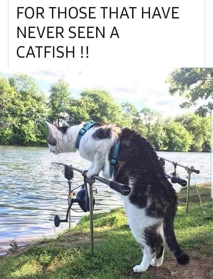 Canidae - FOR THOSE THAT HAVE NEVER SEEN A CATFISH !!