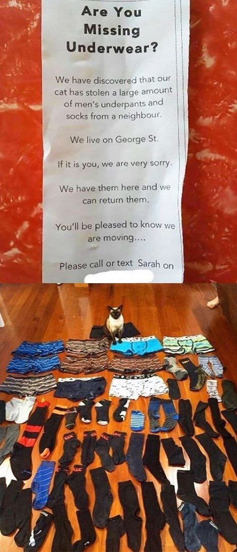 Orange - Are You Missing Underwear? We have discovered that our cat has stolen a large amount of men's underpants and socks from a neighbour. We live on George St. If it is you, we are very sorry. We have them here and we. can return them. You'll be pleased to know we are moving.... Please call or text Sarah on