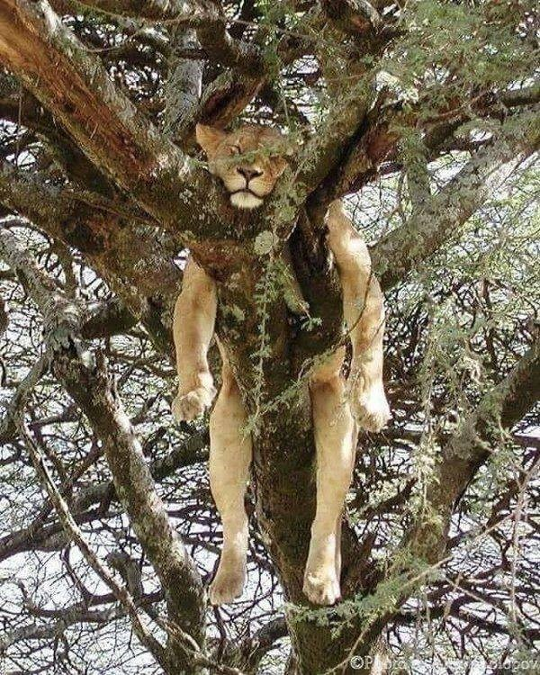 Tree - OP lopor