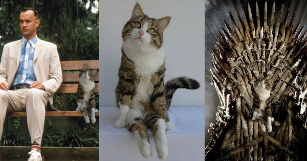 photoshop disabled photoshop battle sitting Cats - 942341