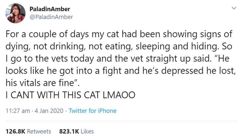 """Text - PaladinAmber @PaladinAmber For a couple of days my cat had been showing signs of dying, not drinking, not eating, sleeping and hiding. So to the vets today and the vet straight up said. """"He go looks like he got into a fight and he's depressed he lost, his vitals are fine"""". I CANT WITH THIS CAT LMAOO 11:27 am · 4 Jan 2020 · Twitter for iPhone 126.8K Retweets 823.1K Likes"""