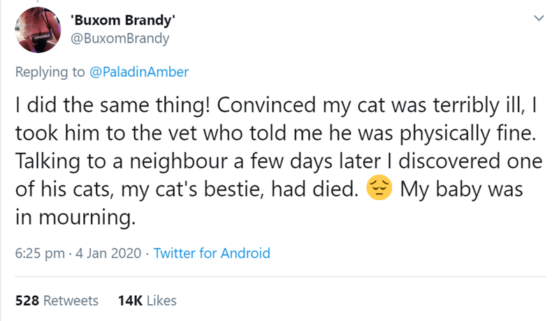Text - 'Buxom Brandy' @BuxomBrandy Replying to @PaladinAmber I did the same thing! Convinced my cat was terribly ill, I took him to the vet who told me he was physically fine. Talking to a neighbour a few days later I discovered one of his cats, my cat's bestie, had died. in mourning. My baby was 6:25 pm · 4 Jan 2020 · Twitter for Android 528 Retweets 14K Likes