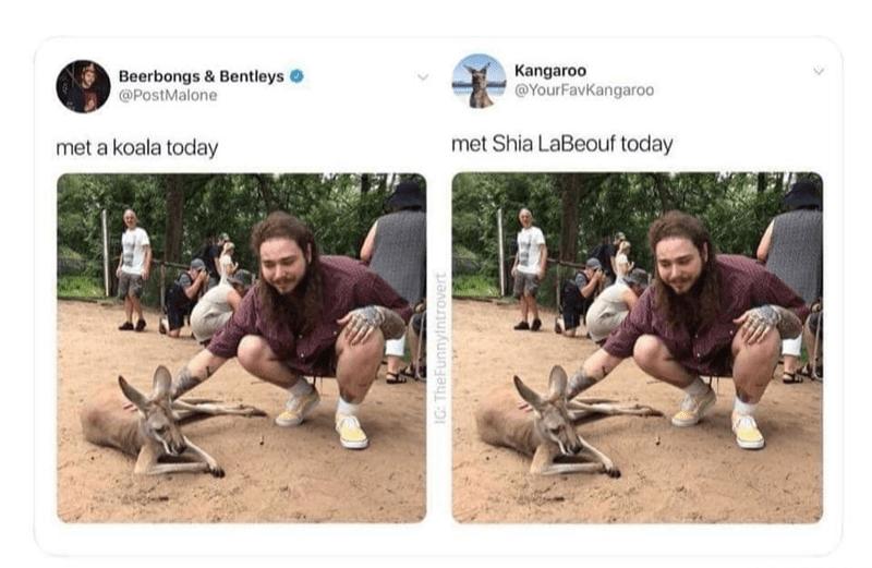Adaptation - Kangaroo @YourFavKangaroo Beerbongs & Bentleys @PostMalone met Shia LaBeouf today met a koala today IG: TheFunnyintrovert