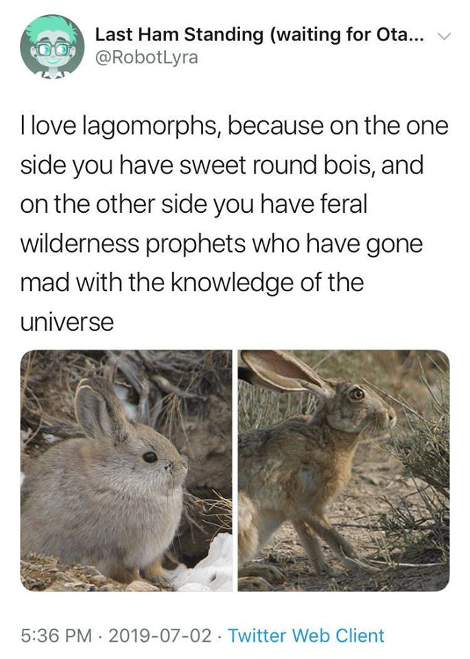 Mountain Cottontail - Last Ham Standing (waiting for Ota... v @RobotLyra I love lagomorphs, because on the one side you have sweet round bois, and on the other side you have feral wilderness prophets who have gone mad with the knowledge of the universe 5:36 PM 2019-07-02·Twitter Web Client
