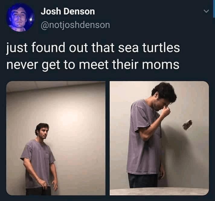 Text - Josh Denson @notjoshdenson just found out that sea turtles never get to meet their moms