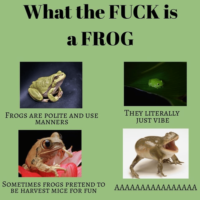 Frog - What the FUCK is a FROG THEY LITERALLY JUST VIBE FROGS ARE POLITE AND USE MANNERS SOMETIMES FROGS PRETEND TO BE HARVEST MICE FOR FUN AAAAAAAAAAAAAAAA