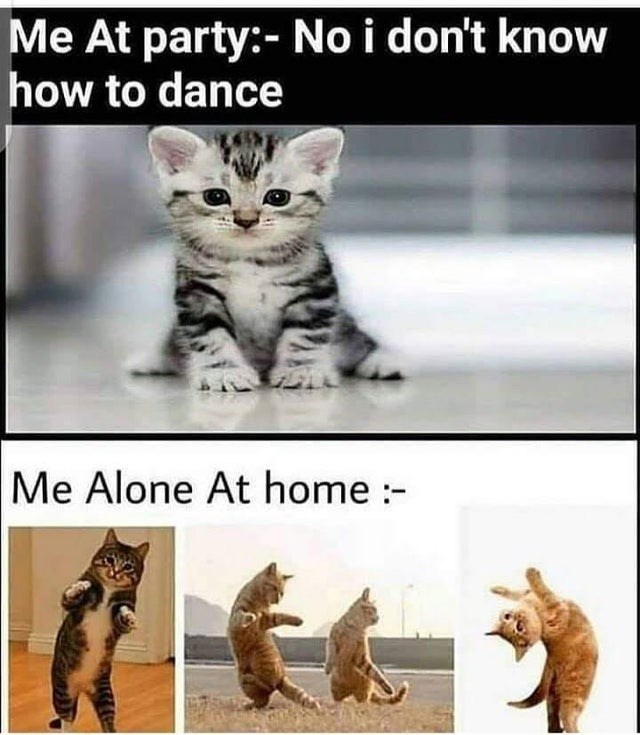 Cat - Me At party:- No i don't know how to dance Me Alone At home :-