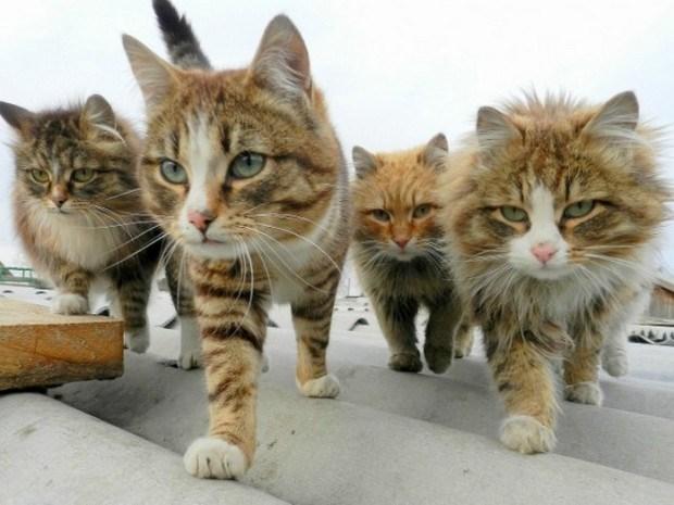 photos of cat gangs