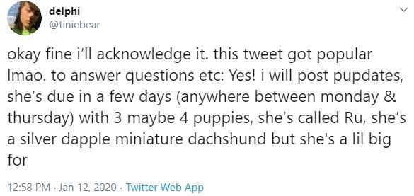 Text - delphi @tiniebear okay fine i'll acknowledge it. this tweet got popular Imao. to answer questions etc: Yes! i will post pupdates, she's due in a few days (anywhere between monday & thursday) with 3 maybe 4 puppies, she's called Ru, she's a silver dapple miniature dachshund but she's a lil big for 12:58 PM Jan 12, 2020 · Twitter Web App