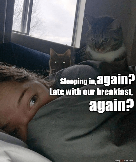 Cat - Sleeping in, again? Late with our breakfast, again? funny CATsite.com