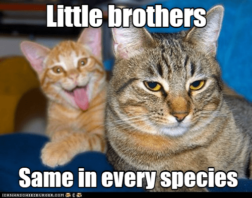 Cat - Little brothers Same in every species ICANHASCHEEZE URGER.COM