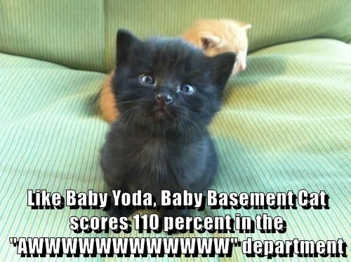 "Cat - Like Baby Yoda, Baby Basement cat scores 110 percentin the ""AWWWWWWWWWWWdenartment"