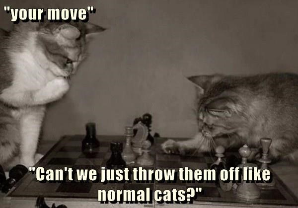 """Cat - """"your move"""" """"Can't we just throw them off like normal cats?"""""""