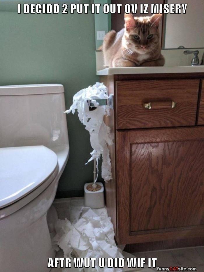 Room - I DECIDD 2 PUT IT OUT OV IZ MISERV AFTR WUT U DID WIF IT funnyCATsite.com