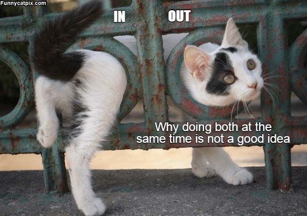 Cat - Funnycatpix.com OUT IN Why doing both at the same time is not a good idea