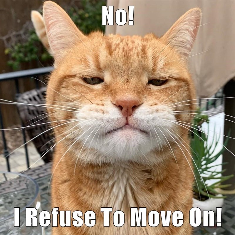 Cat - No! I Refuse To Move On!