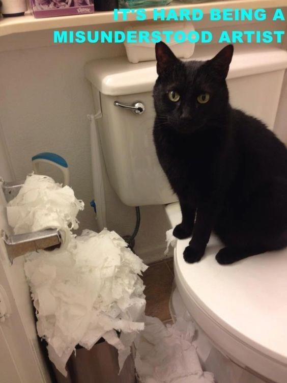 Cat - MARD BEITNG A MISUNDERSTOD ARTIST