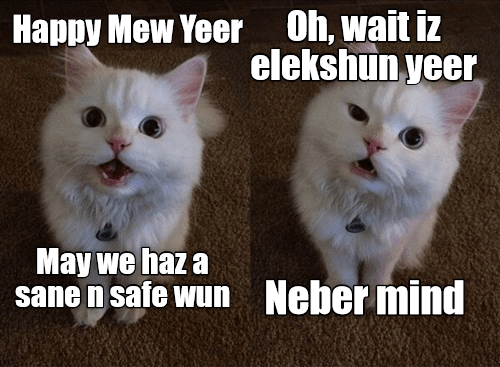 Cat - Oh, wait iz elekshun yeer Happy Mew Yeer May we haz a sane n safe wun Neber mind