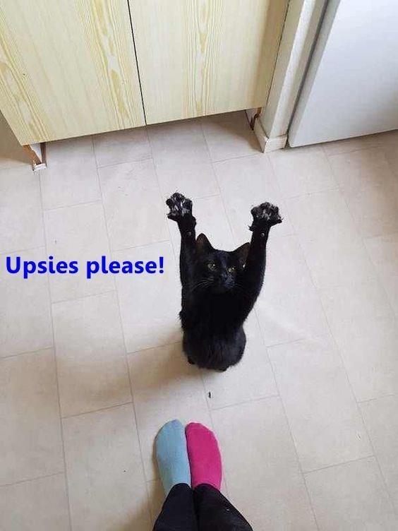 Black - Upsies please!