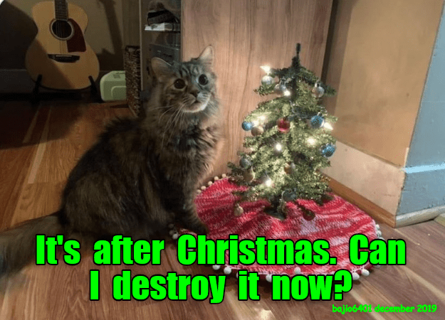 Cat - It's after Christmas. Can I destroy it noW? bajio640 december 2019