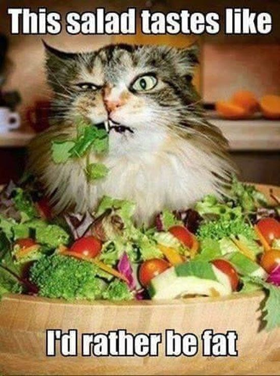 Cat - This salad tastes like I'd rather be fat