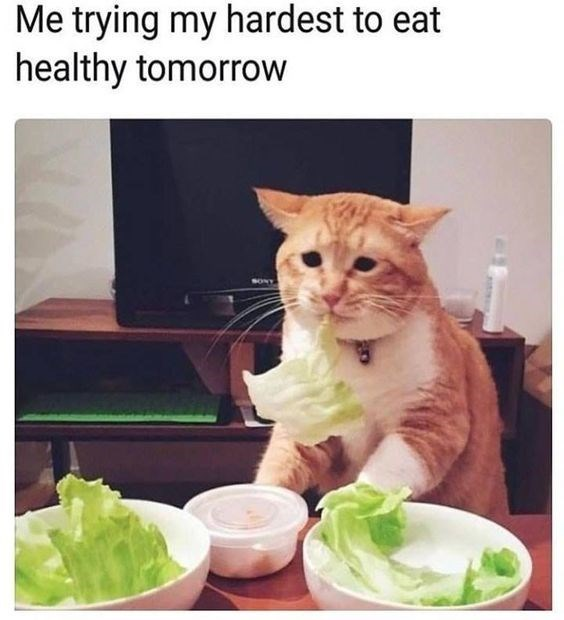 Cat - Me trying my hardest to eat healthy tomorrow SONY