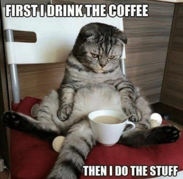 Cat - FIRST IDRINK THE COFFEE THEN I DO THE STUFF