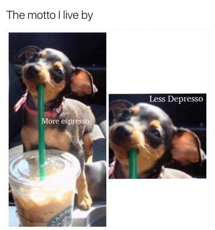 Dog - The motto I live by Less Depresso More espressO ELAE STA