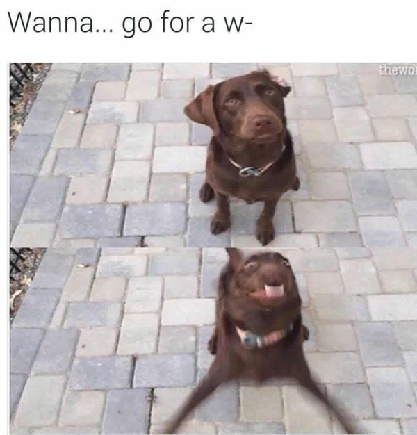 Dog - Wanna... go for a w- thewo