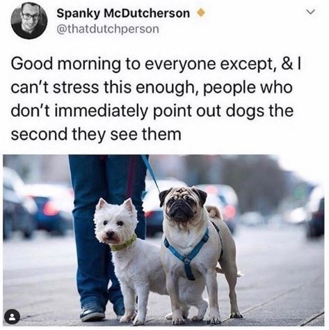 Vertebrate - Spanky McDutcherson @thatdutchperson Good morning to everyone except, & I can't stress this enough, people who don't immediately point out dogs the second they see them <>