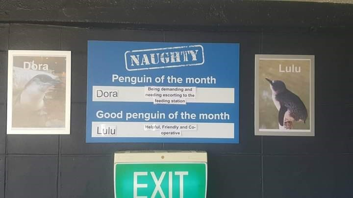 Signage - NAUGHTY Dora Lulu Penguin of the month Being demanding and needing escorting to the feeding station Dora Good penguin of the month Helpful, Friendly and Co- Lulu operative EXIT