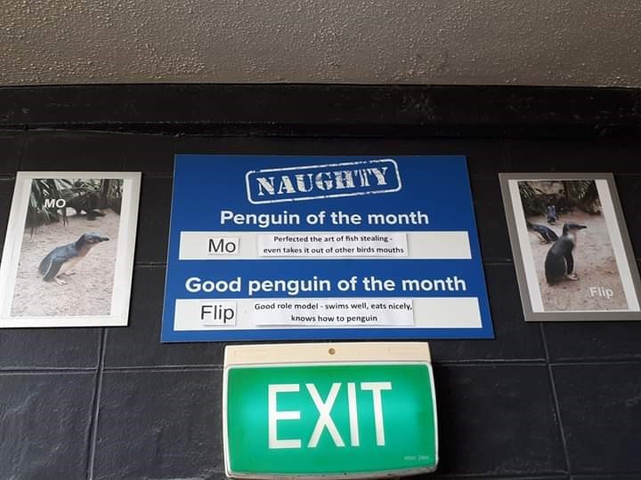 Signage - NAUGHTY Penguin of the month Perfected the art of ish stealing- even takes it out of other birds mouths Mo penguin of the month Good role model - swims well, eats nicely. knows how to penguin Good Flip Flip EXIT