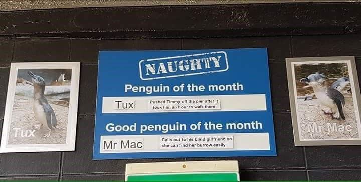 Signage - NAUGHTY Penguin of the month Tux Pushed Timmy off the pier after it took him an hour to walk there Good penguin of the month Mr Mac Tux Mr Mac Calls out to his blind girifriend so she can find her burrow easily
