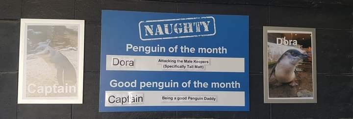 Text - NAUGHTY Dora Penguin of the month Doral Attacking the Male Keepers (Specifically Tall Matt) Good penguin of the month Captain Capt ain Being a good Penguin Daddy