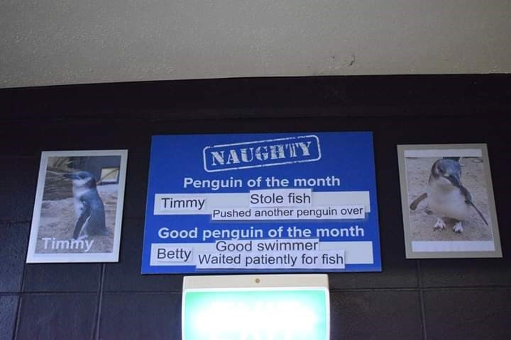 Display device - NAUGHTY Penguin of the month Stole fish Pushed another penguin over Timmy Good penguin of the month Good swimmer Betty waited patiently for fish Timmy