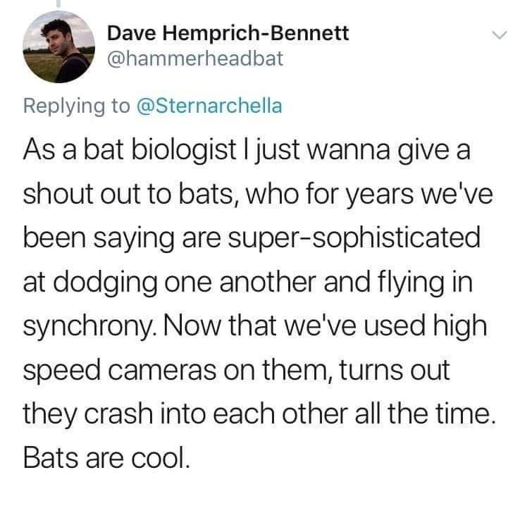 Text - Dave Hemprich-Bennett @hammerheadbat Replying to @Sternarchella As a bat biologist I just wanna give a shout out to bats, who for years we've been saying are super-sophisticated at dodging one another and flying in synchrony. Now that we've used high speed cameras on them, turns out they crash into each other all the time. Bats are cool.