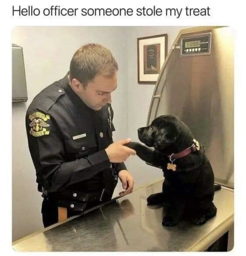 Dog - Hello officer someone stole my treat IKE