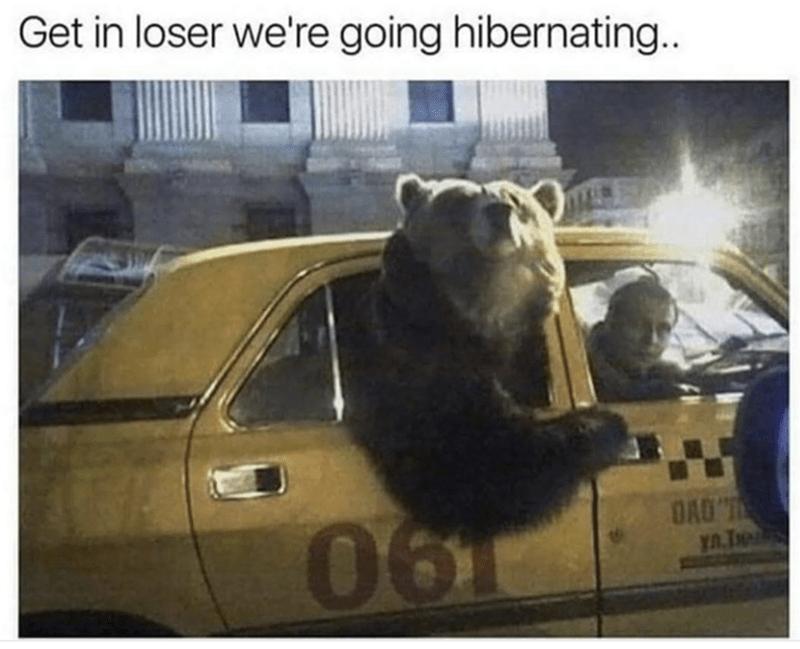 Bear - Get in loser we're going hibernating.. 0610 YA.T